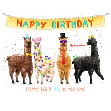 Partying Alpacas